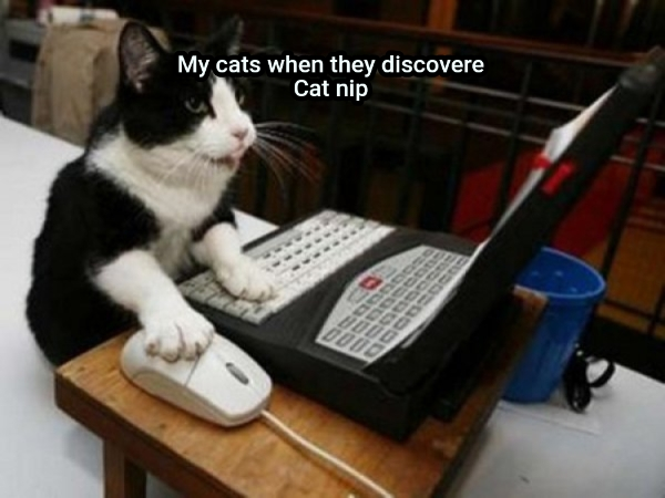 My cats when they discovere Cat nip