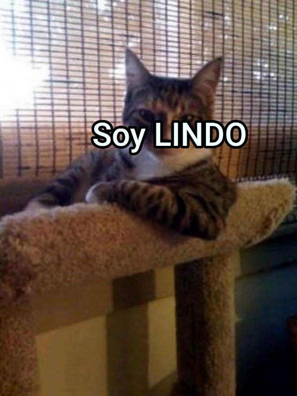 Soy LINDO